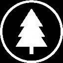 icona pino loricato